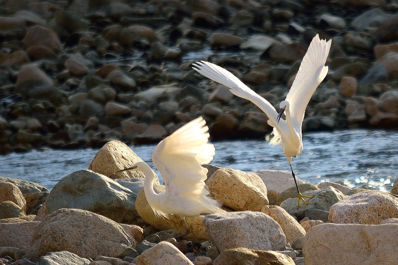白鷺の住めるまちづくり