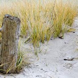 Beachwood Vetiver Soy Candle