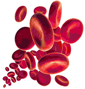 Blutplättchen.PNG