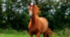Premier Lola (sire Taloubet Z) Premier Sports Horses