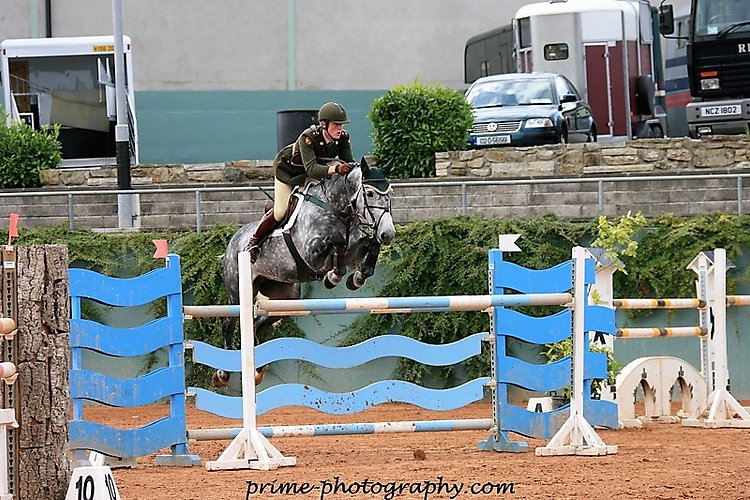 Armagh 1.40m Grand Prix horse. Sire Cavalier Royale. Premier Sports Horses