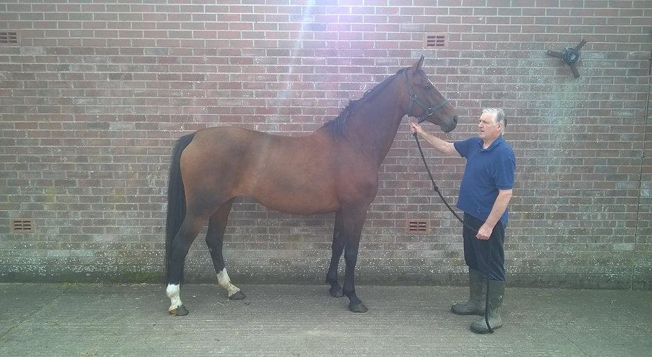 PREMIER CENTO (sire Cento) Premier Sports Horses