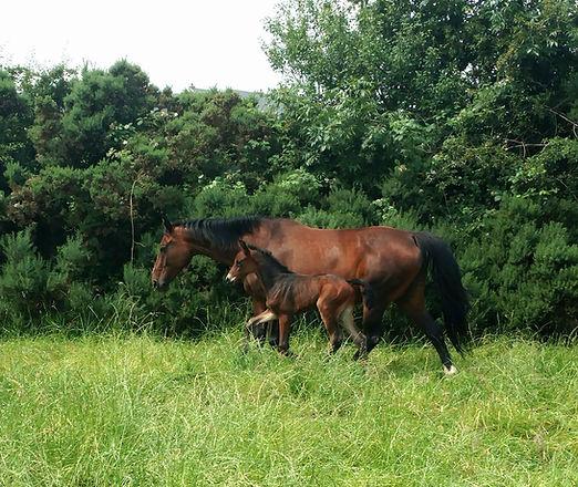 Colt foal by Premier Sport