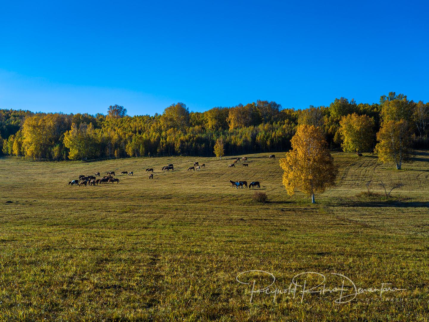 Autumn in Inner Mongolia