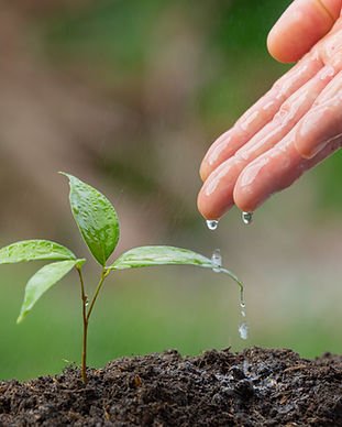 close-up-picture-of-hand-watering-the-sa