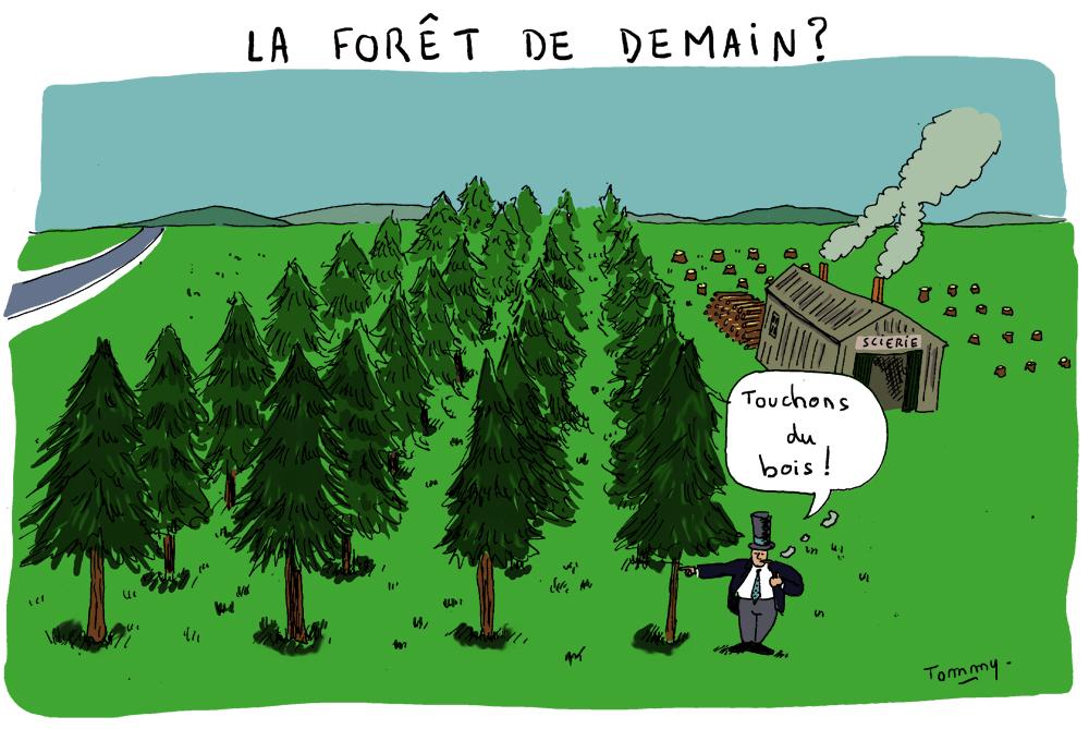 La forêt de demain ?