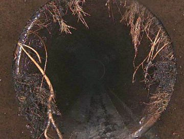 tree roots growing into sewer pipes sydney nsw