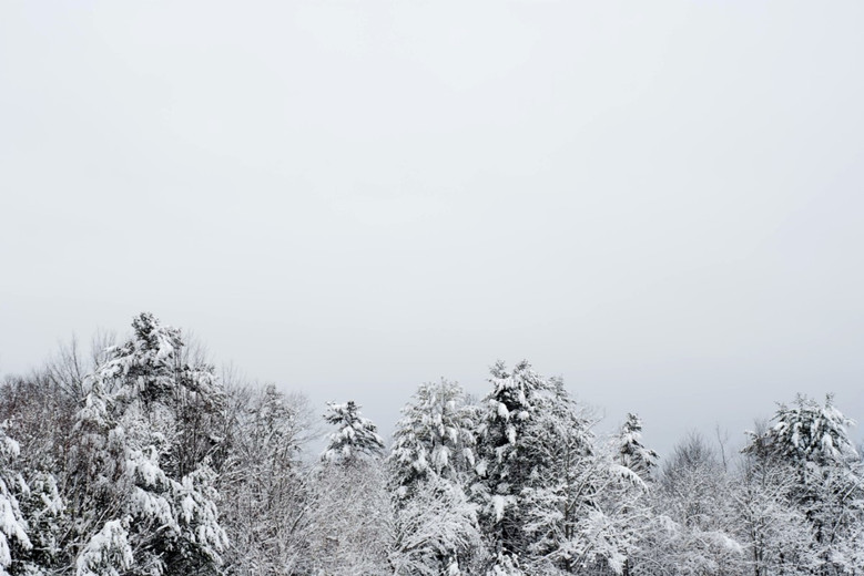 White Forest and Gray Sky
