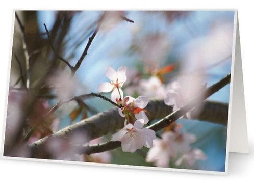 Spring Garden Card Set