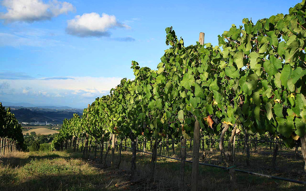 Vineyard day for two at Kerryvale