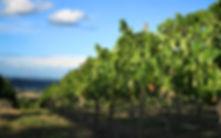 Wine Bottling, vinyard