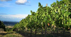 Natural disasters decimate global wine production