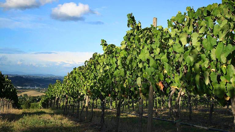 Visite et Dégustation de vin écologique dans une cave