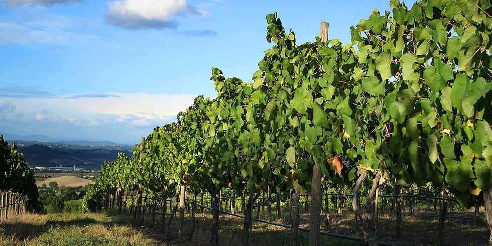 Destination Vignobles Bordeaux