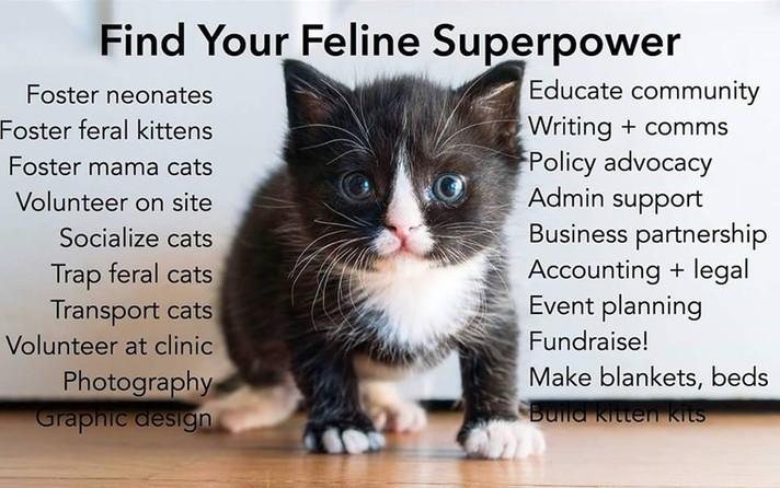 CatSuperpower.jpg