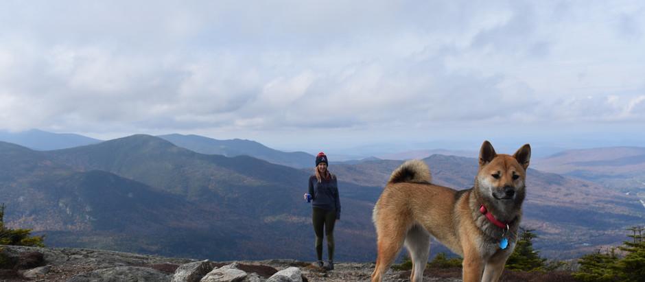 Mt Jackson: A Tale of Fall Foliage and Human Feces