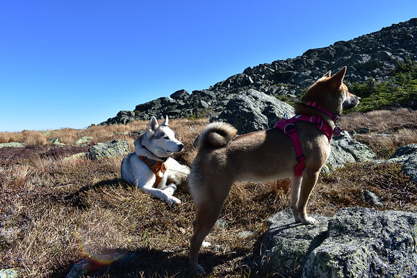 Blaze and Luna on Mt. Madison