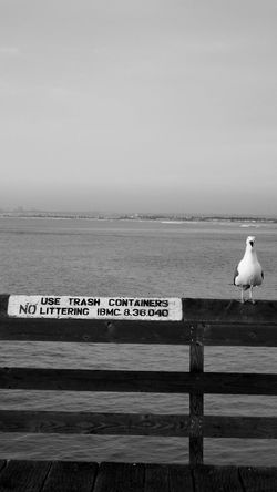#occupyseagull protest 1