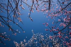 Spring season in Bhutan