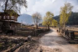 Adventure in Gantey Bhutan