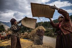 Rice winnowing in Bhutan