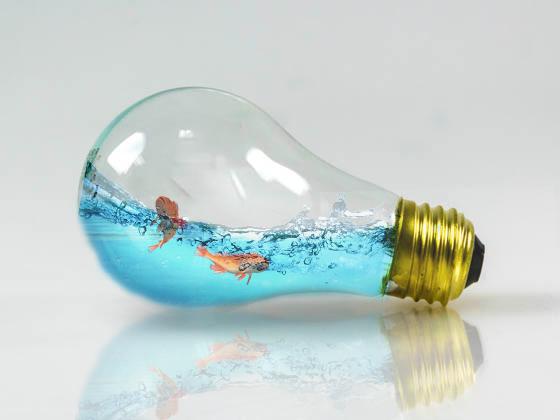 lightbulb and fish