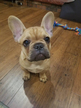 Our Top Picks For New Pet Parents