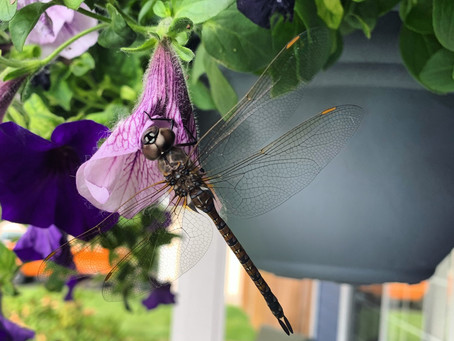 Message from a Dragonfly