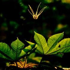 02. Nature (3).jpg