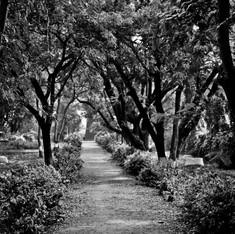 04. Landscape (16).jpg
