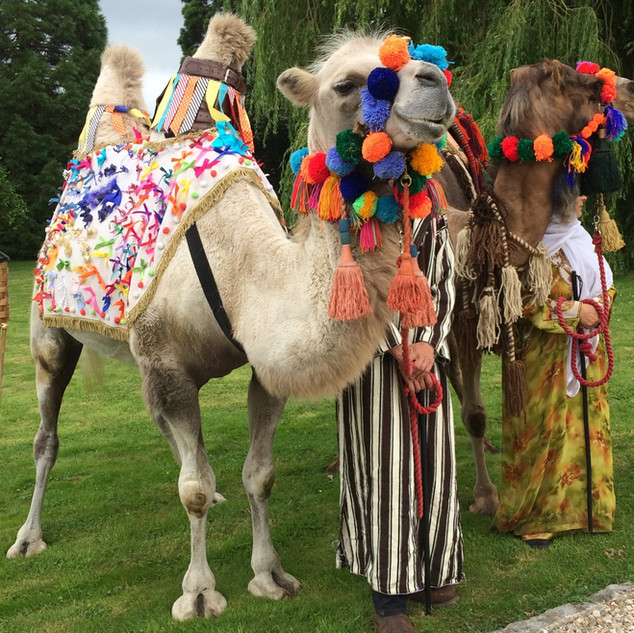 Camels for an Eastern themed party.