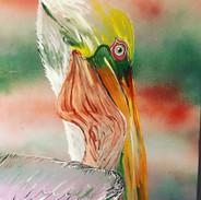 Pelican2_CC2019.jpg