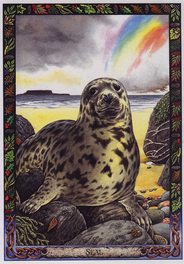 A spotted seal perched on a rock on a beach, a rainbow to the right and cloud cover to the left.