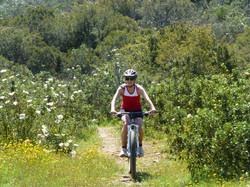Salema Bike Rental