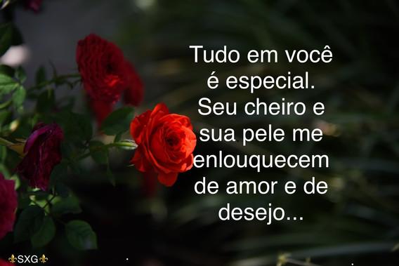 rosas, flores, amor, desejo