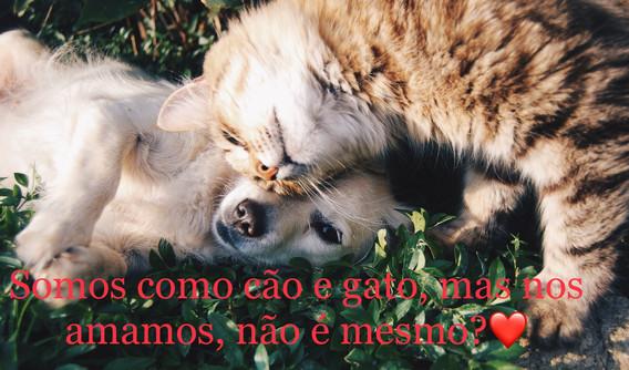amor, animal