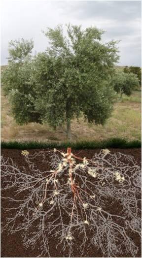 Hongos en simbiósis con planta