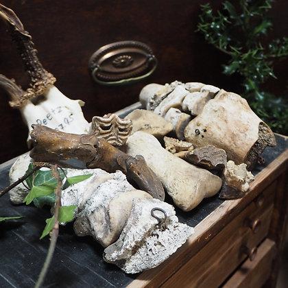 Mixed lot of Equine Bones