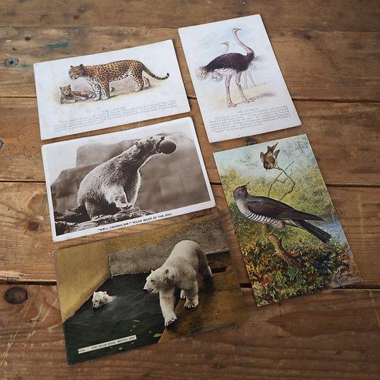 x5 Animal Themed Vintage Postcards