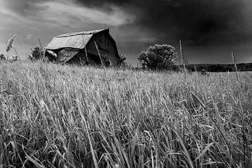 lost-grass-5233bw.jpg
