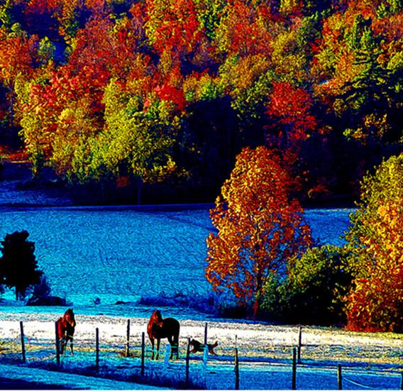 Foliage_horses.jpg