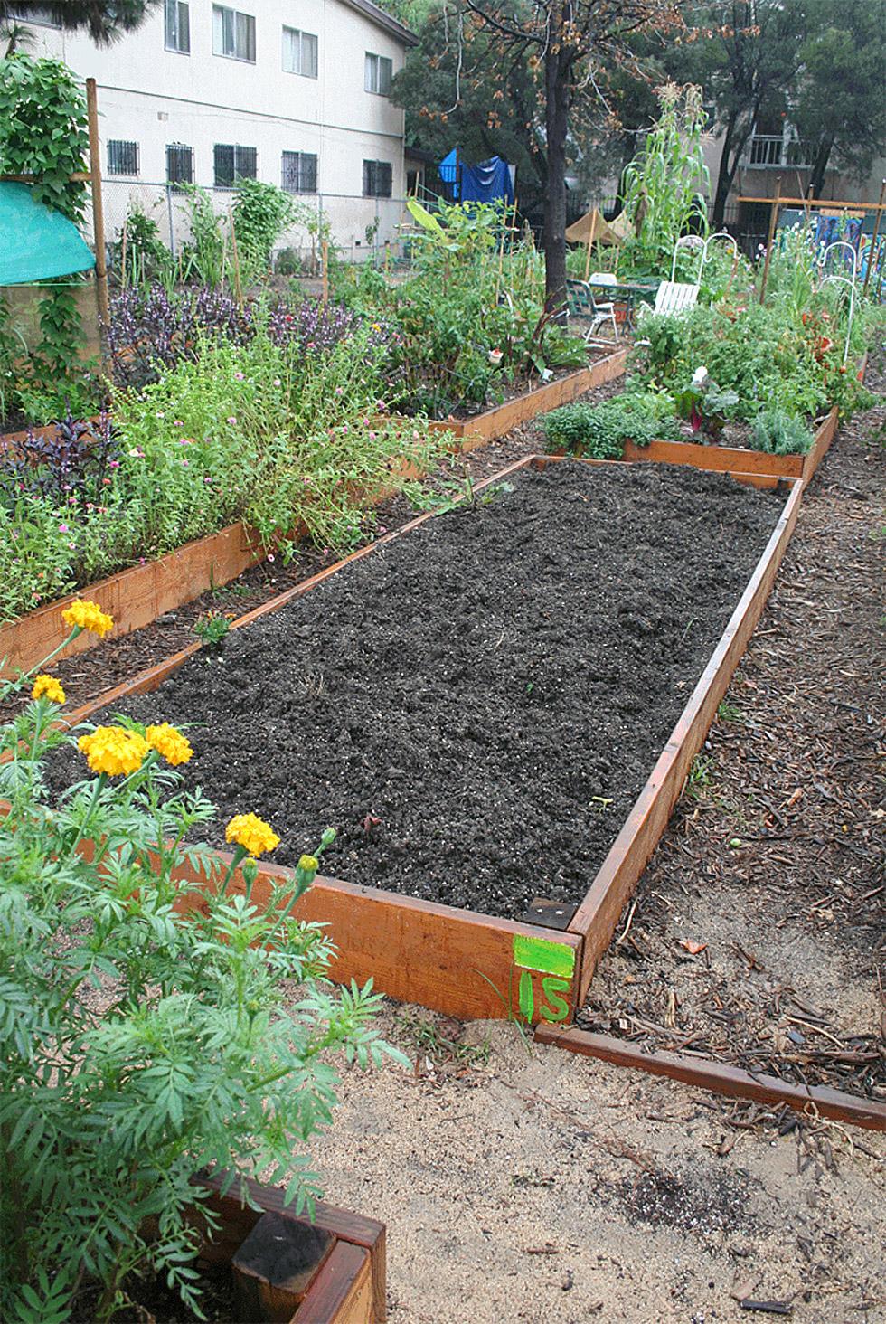 alferov-media-los-angeles-fountain-community-gardens-first-spring-season