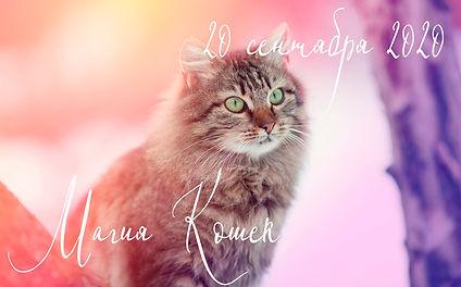 магия кошек .jpg