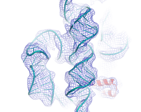 h44(right)+h8(left_bottom)+h14(left_top)_white_bckg.png