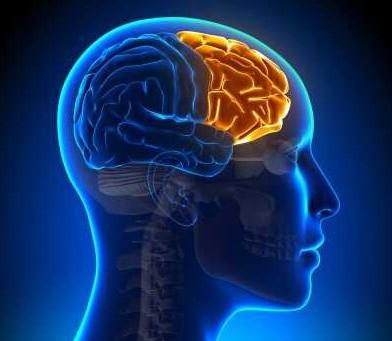 Nuestro cerebro frontal