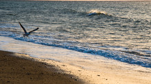 The Little Jaunt - Cape Cod and Nantucket