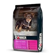 Cobber Puppy