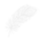 grey-feather-2100x2100.png