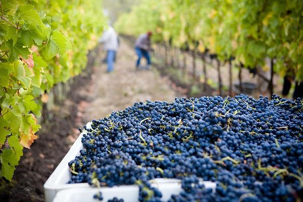 lasseter-winery-asG1QSDvb4g-unsplash.jpg