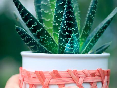 How Aloe Juice Improved My Gut Health